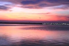Solnedgång på fjärden Arkivfoton