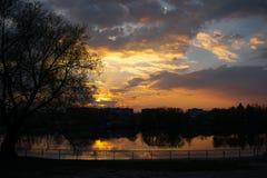Solnedgång på flodstranden med trädet royaltyfri fotografi