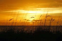 Solnedgång på golfen Arkivfoto