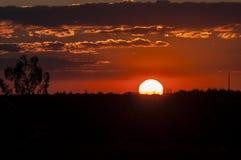 Solnedgång på gräsförgrund royaltyfria bilder