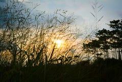 Solnedgång på grässlätten arkivbilder