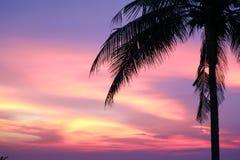 solnedgång på havs- och konturträd och färgrik molnaftonhimmel royaltyfria bilder