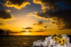 Solnedgång på havsaftonseascape, gula vildblommor, ostronsäng Royaltyfria Bilder