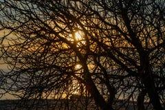 Solnedgång på havskusten i guling till och med konturerna av trädfilialer arkivbilder