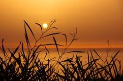 Solnedgång på Leaves Royaltyfri Fotografi