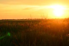 Solnedgång på naturen Arkivfoto