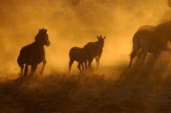 Solnedgång på Okaukeujo, Namibia 3 Royaltyfri Fotografi