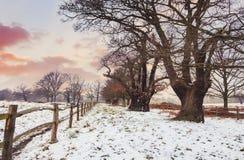 Solnedgång på Richmond Park för ligganderussia för 33c januari ural vinter temperatur fotografering för bildbyråer
