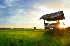 Solnedgång på ris arkivfoto