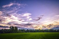 Solnedgång på risfältet Royaltyfri Fotografi