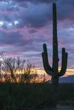 Solnedgång på Saguaronationalparken Arkivfoton