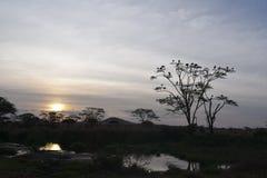 Solnedgång på Serengeti Royaltyfri Foto
