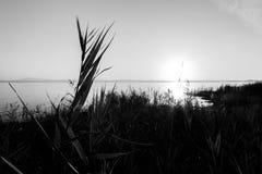 Solnedgång på sjön, med vasser och växter i förgrunden och royaltyfri bild