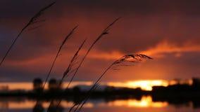 Solnedgång på sjön, spikelets lager videofilmer