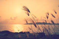 Solnedgång på sjösidan med gräs i förgrunden Bilden har a Royaltyfria Foton