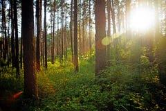 Solnedgång på skogen Arkivbilder