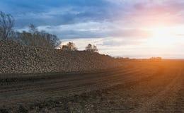 Solnedgång på sockerfält Fotografering för Bildbyråer