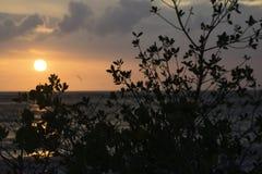 Solnedgång på St Pete Arkivbild