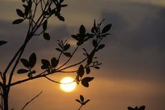 Solnedgång på St Pete Royaltyfri Fotografi