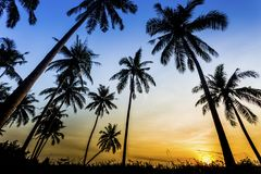 Solnedgång på stranden av det karibiska havet Royaltyfri Foto