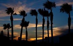 Solnedgång på stranden med palmträdkonturn Royaltyfria Foton