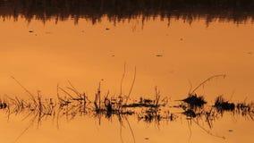 Solnedgång på swamp arkivfilmer