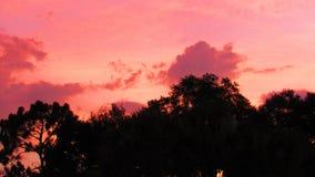 Solnedgång på träden Royaltyfri Fotografi
