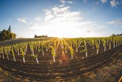 Solnedgång på vingården Arkivbilder