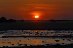 Solnedgång på waterholen Royaltyfria Foton