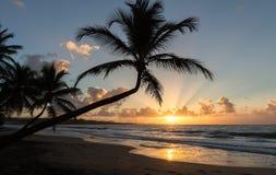 Solnedgång, paradisstrand och palmträd, Martinique ö arkivfoto