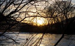 Solnedgång sedd ho per grupp av filialer främst af en flod med något dimma och ljust skina fotografering för bildbyråer