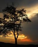 Solnedgång Silhouete Arkivbild
