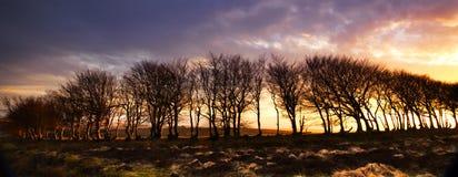 Solnedgång Silouette Fotografering för Bildbyråer
