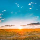 Solnedgång soluppgång över lantligt ängfält Ljus dramatisk himmel över bygd royaltyfri fotografi