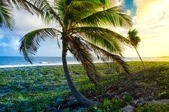 Solnedgång som förbiser palmträden på stenkusten royaltyfri bild