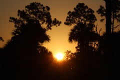 Solnedgång som tas på den stora cypressen, Everglades, Florida Arkivbilder