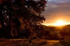 Solnedgång sydliga Kalifornien kullar i höst, dunge av levande ekar Royaltyfri Fotografi
