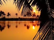 Solnedgång till och med bladet Arkivfoto