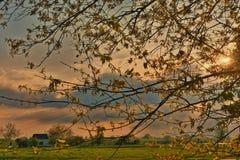 Solnedgång till och med braqnchesna Royaltyfria Foton