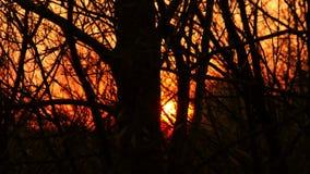 Solnedgång till och med den Forest Time Lapse 4K videoen lager videofilmer