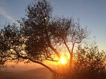 Solnedgång till och med eken Royaltyfria Bilder