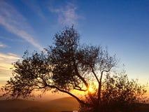 Solnedgång till och med eken Arkivfoto