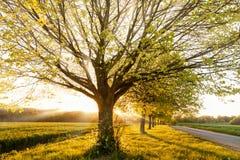 Solnedgång till och med en linje av lantliga träd Royaltyfri Foto