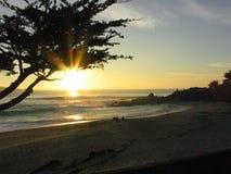 Solnedgång till och med ett cypressträd Arkivbilder