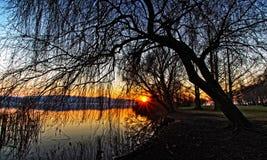 Solnedgång till och med filialerna fotografering för bildbyråer