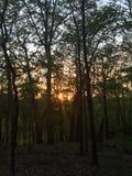 Solnedgång till och med skogen royaltyfri foto