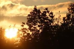 Solnedgång till och med träden royaltyfria foton