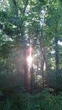 Solnedgång till och med träden Royaltyfri Fotografi