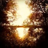 Solnedgång till och med träden Arkivbild