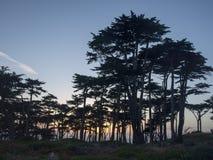 Solnedgång till och med träden Arkivfoto